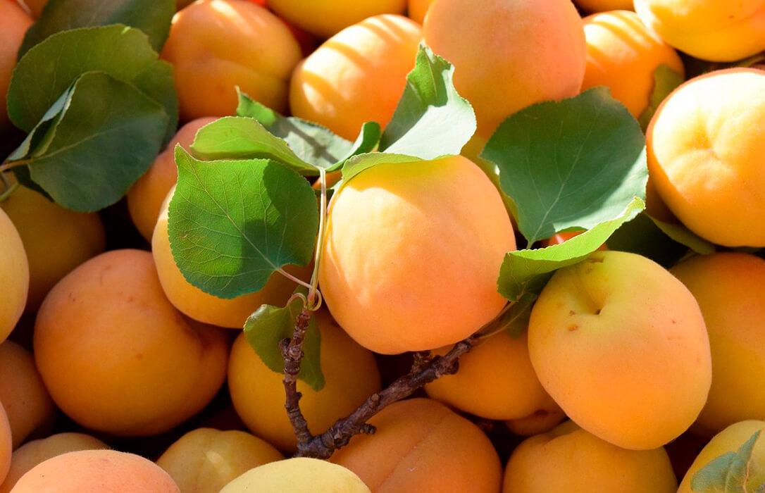 En Europa se hielan mientras que en España se frotan las manos por los beneficios que conllevará ante la campaña de fruta de hueso