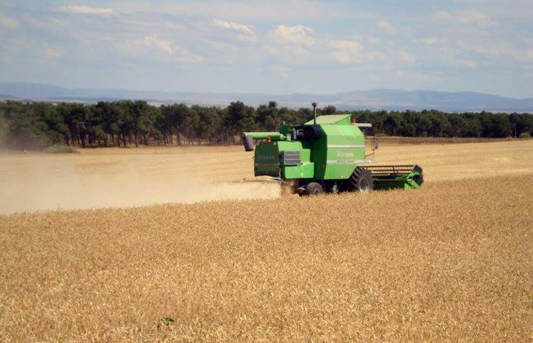 Los precios de los cereales empiezan una etapa de contención con caídas de avena y trigo y moderación en el resto