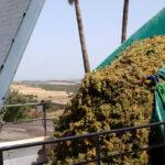 Exigen a Planas que reclame fondos adicionales a la UE para el vino español ante el temor de que se pueda quedar sin él 1