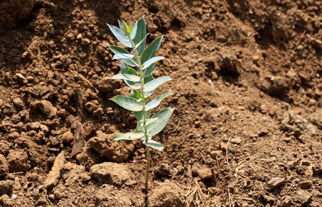 Agroblen Tablet, la nueva gama de fertilizantes encapsulados de ICL para mejorar la plantación de frutales, forestal, viñas y huertos