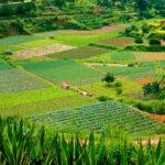 La enorme distancia entre el modelo ideal y el real: Una agricultura 100% ecológica compromete la independencia alimentaria en la UE 1