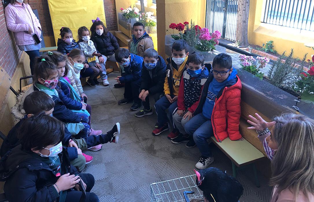 'La Barja' lleva la granja al colegio para que alumnos y alumnas de 3, 4 y 5 años aprendan la producción de huevos ecológicos