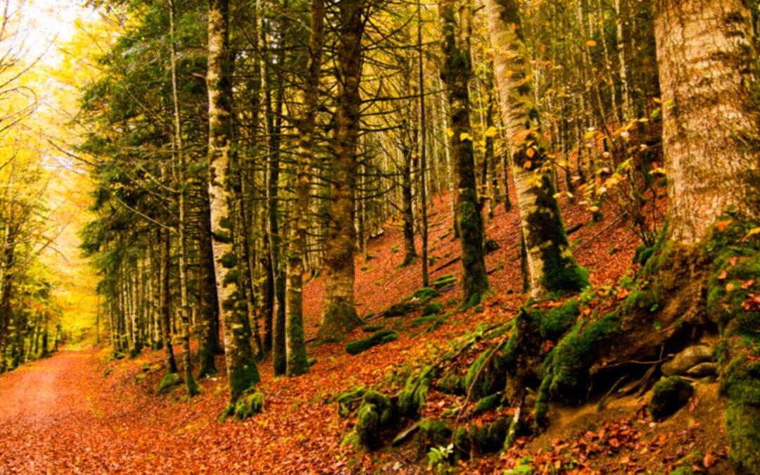 Respaldo a la Ley de Cambio Climático: Primer paso para la valorización económica de los bosques como principales sumideros de CO2
