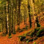 Respaldo a la Ley de Cambio Climático: Primer paso para la valorización económica de los bosques como principales sumideros de CO2 1