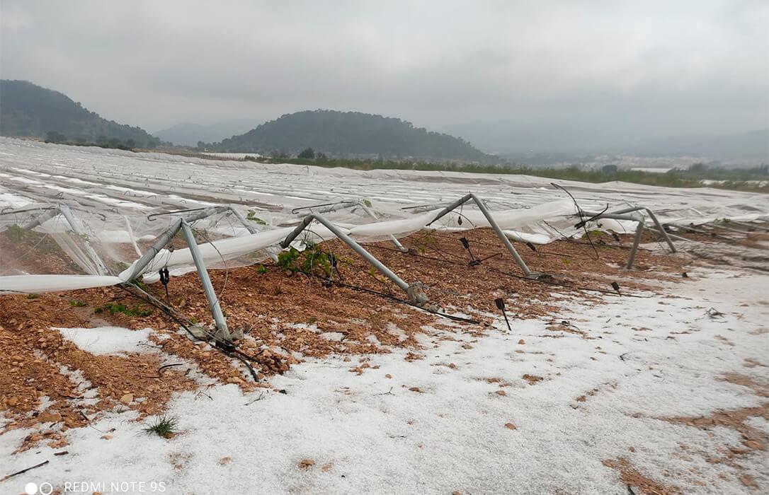 Las tormentas del martes afectaron a unas 2.000 hectáreas y dejan unos daños directos de alrededor de 4 millones de euros