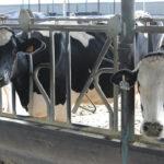Fernando Miranda es la leche: No da ni una solución concreta a la grave crisis de precios y rentabilidad del sector lácteo