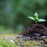 El Congreso aprueba la primera Ley del Cambio Climático en España diseñada para para mitigar sus efectos 1