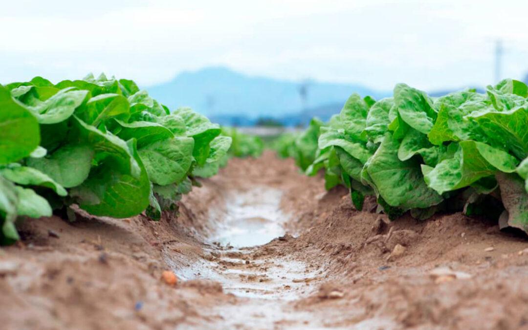 Murcia marca su camino hacia la PAC: Sin derechos históricos, apoyo al agricultor profesional y con ayudas a las hortalizas