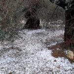 Las tormentas de este domingo con pedrisco dejan graves daños en cultivos de algunas localidades de la comarca de la Plana Baixa 1