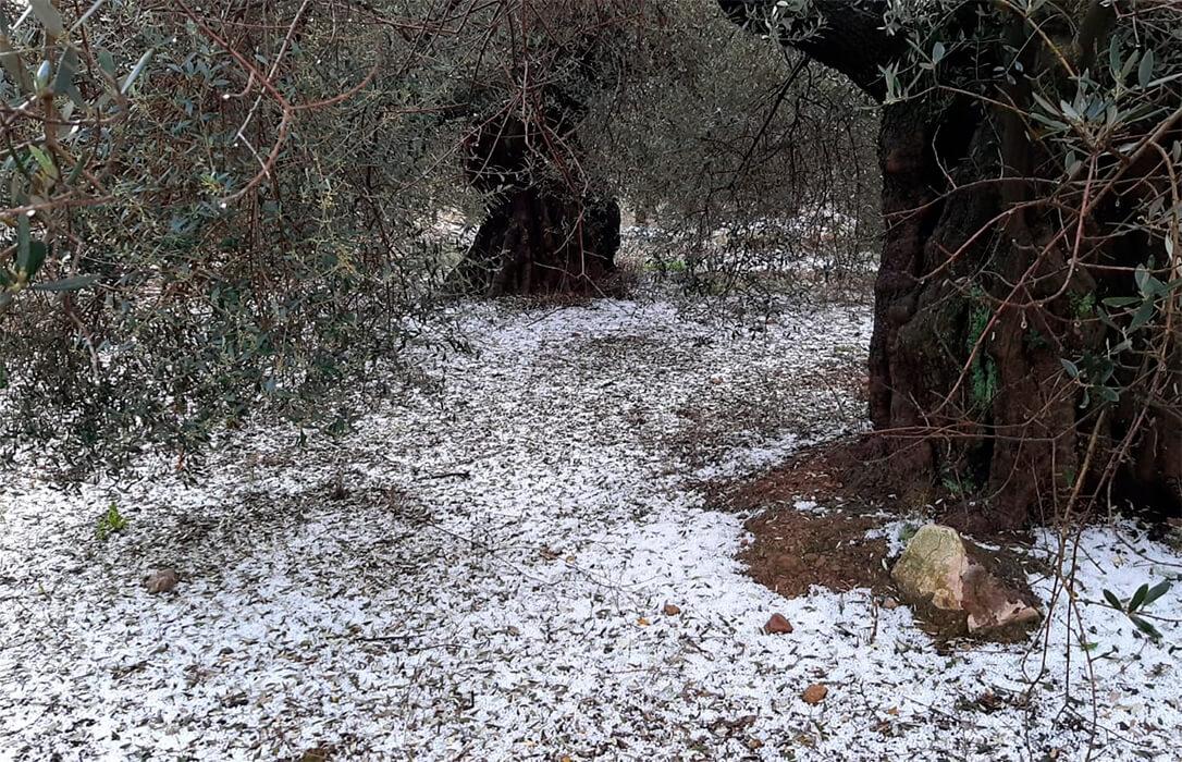 Las tormentas de este domingo con pedrisco dejan graves daños en cultivos de algunas localidades de la comarca de la Plana Baixa