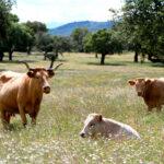 Por Otra PAC defiende que las fincas agrarias pequeñas son «más productivas y beneficiosas para la biodiversidad», pero están marginadas 1