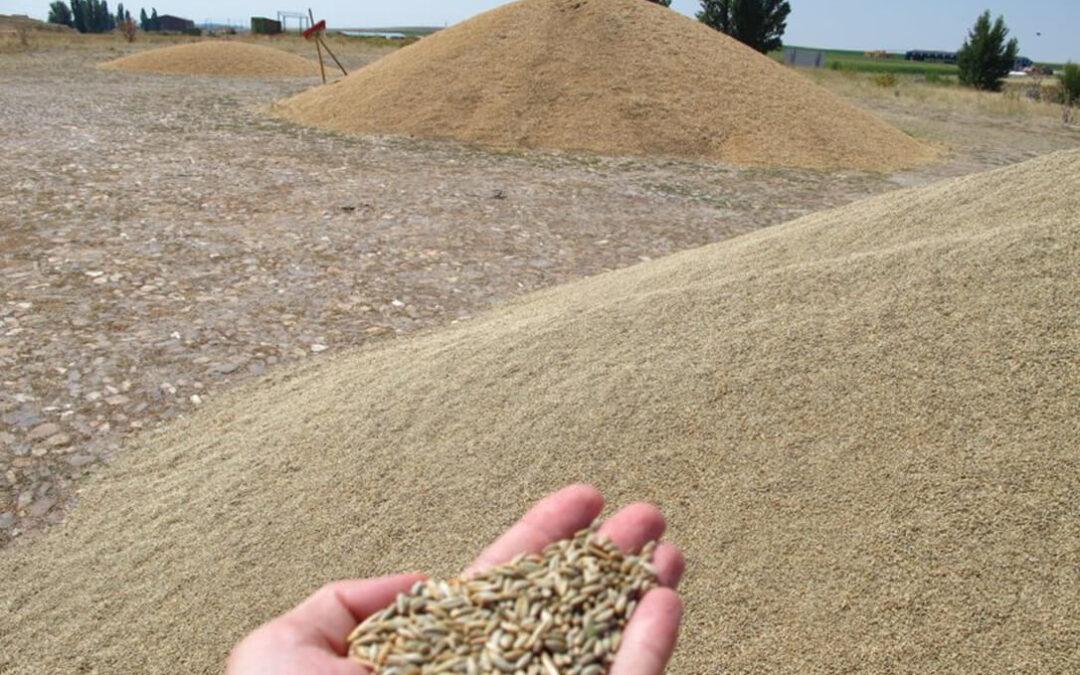 Los mercados de los cereales se vuelven irracionales y superan en León los cuatros euros de alza, que llegaban hasta los 7 euros en la cebada