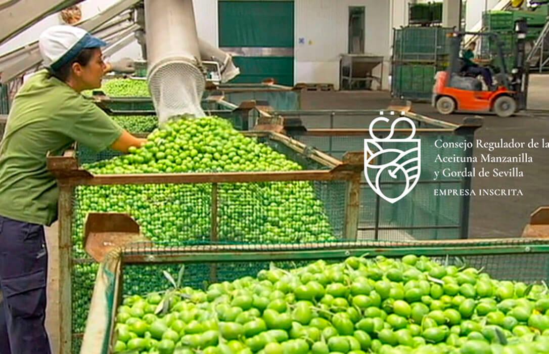 Protocolo de colaboración de la IGP Aceitunas Manzanilla y Gordal de Sevilla para impulsar la profesionalización del sector