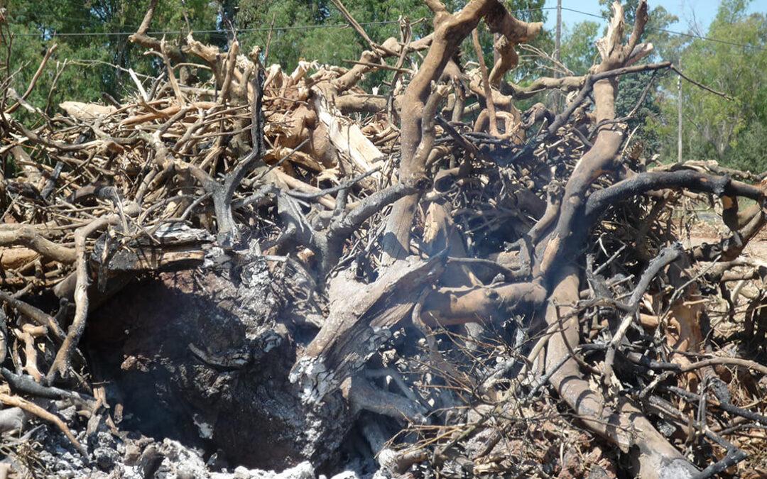 Satisfacción porque se haya acordado prorrogar las quemas en terrenos forestales para abril