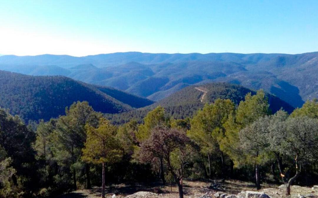 Los selvicultores españoles aplauden la Ley del Cambio Climático y piden estar en el futuro Comité de Expertos