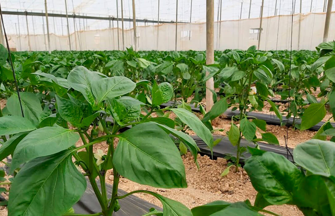 El proyecto SoEClose de agricultura sostenible sitúa a la provincia de Almería como ejemplo mundial en agricultura sostenible