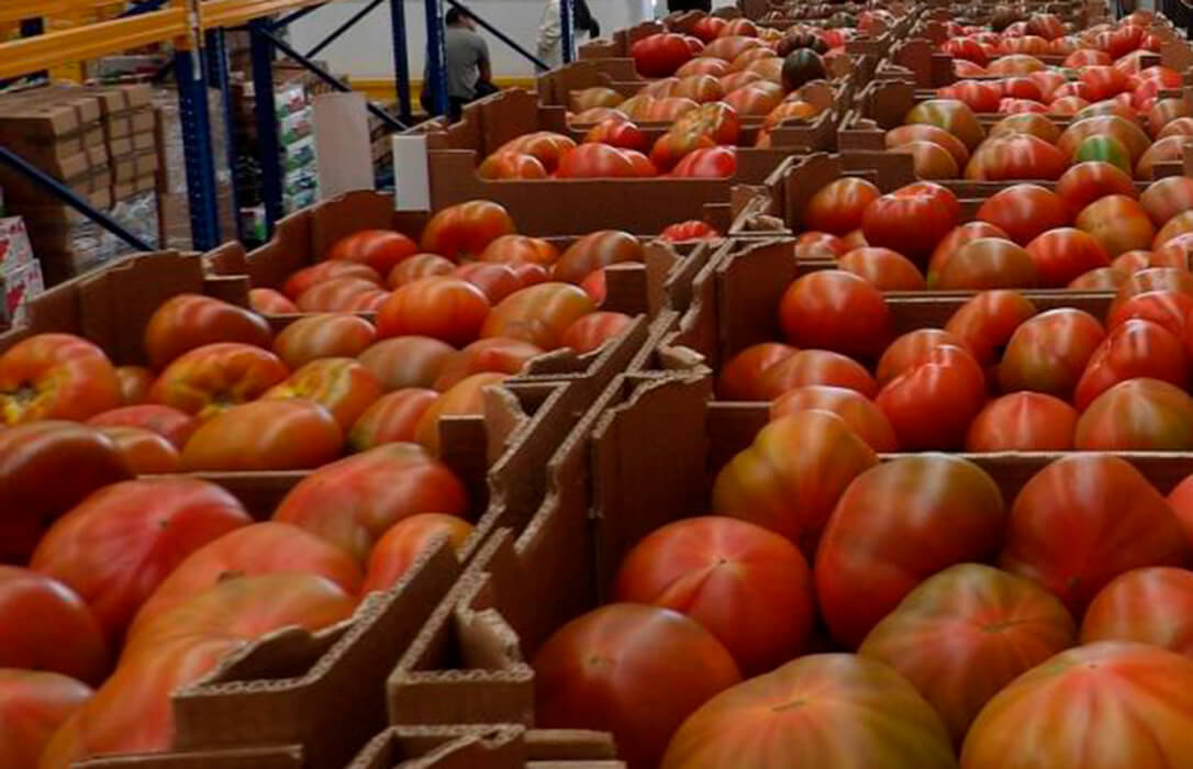 La CE confirma que Marruecos agotó su cupo de tomate con arancel preferente en febrero en plena campaña andaluza
