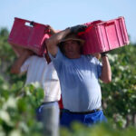 Las denominaciones de origen del vino se oponen a un reglamento único para regímenes de calidad en toda Europa