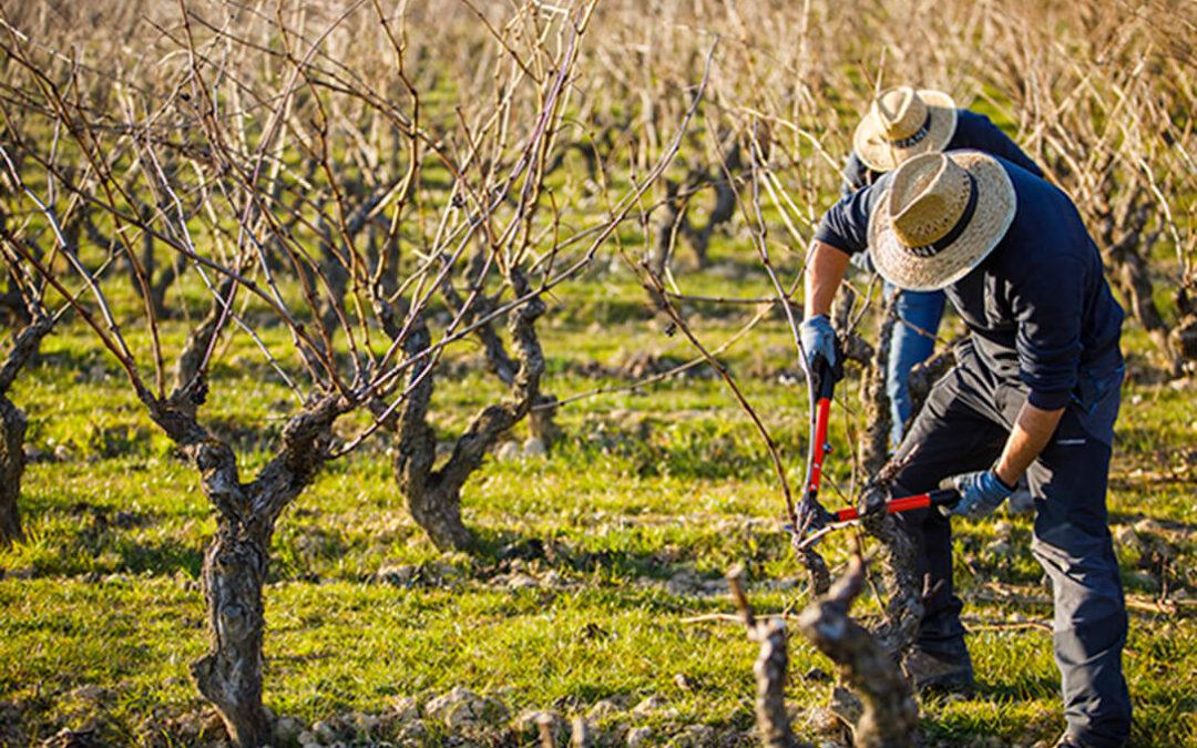 Vino español con denominación propia: El 96% de la superficie de viñedo nacional está en territorios de alguna denominación de calidad