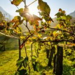 Los grandes vinos de la España vaciada se reivindican ante el mercado basados en la gran profesionalidad de su trabajo 1