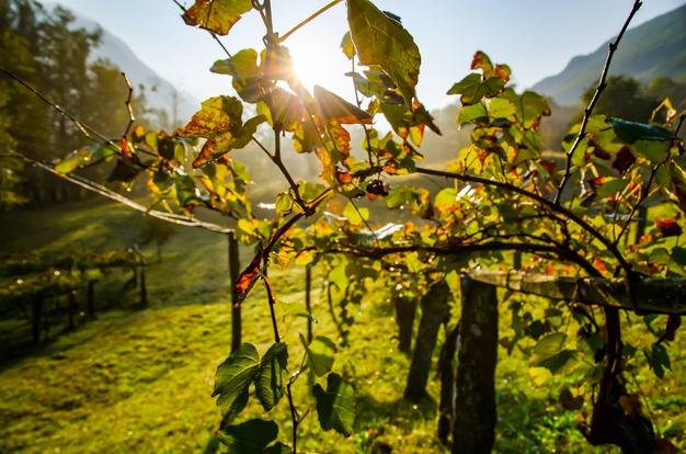 Los grandes vinos de la España vaciada se reivindican ante el mercado basados en la gran profesionalidad de su trabajo