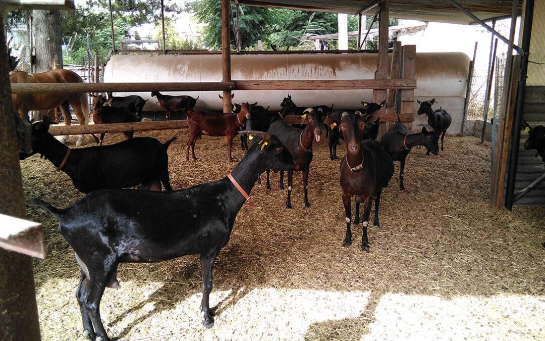 AENOR se convierte en entidad autorizada para la certificación de Bienestar Animal que abarcar todos los eslabones de la cadena