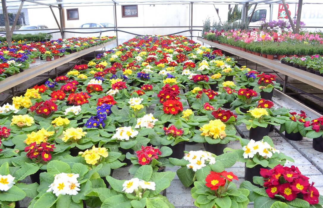 El boom de la jardinería en los hogares por la pandemia provoca pasar de destruir plantas a no dar abasto en los viveros