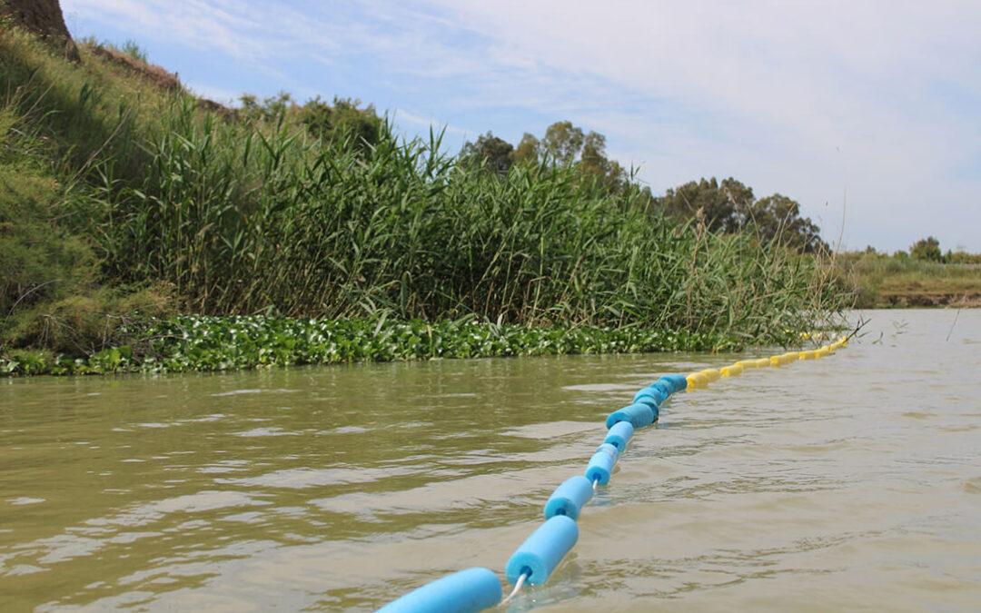 La Junta de Andalucía retira del Guadalquivir 1.600 kilos de camalote y activa un plan de vigilancia sobre esta especie invasora