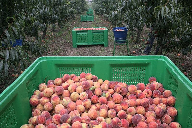 Las principales CCAA productoras de fruta promueven una asociación empresarial más fuerte