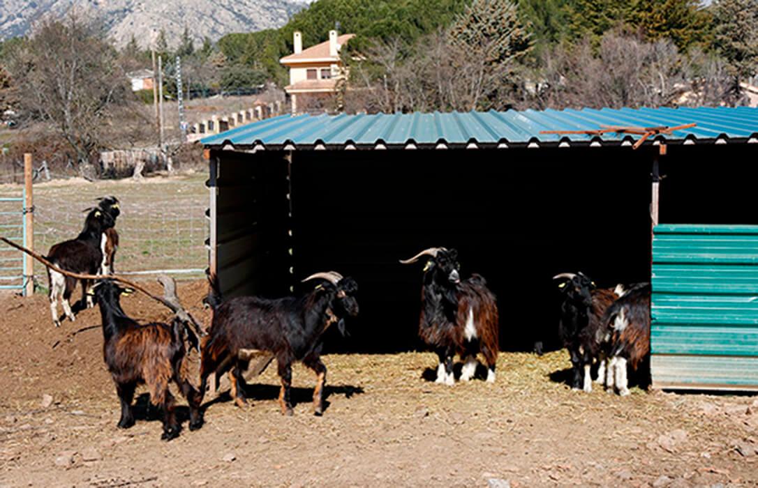 Los agricultores y ganaderos madrileños podrán realizar instalaciones en sus explotaciones sin calificación urbanística