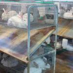 Alertan de que la UE prepara una brutal reconversión en bienestar animal, empujada por los animalistas, que pondrá el peligro al sector