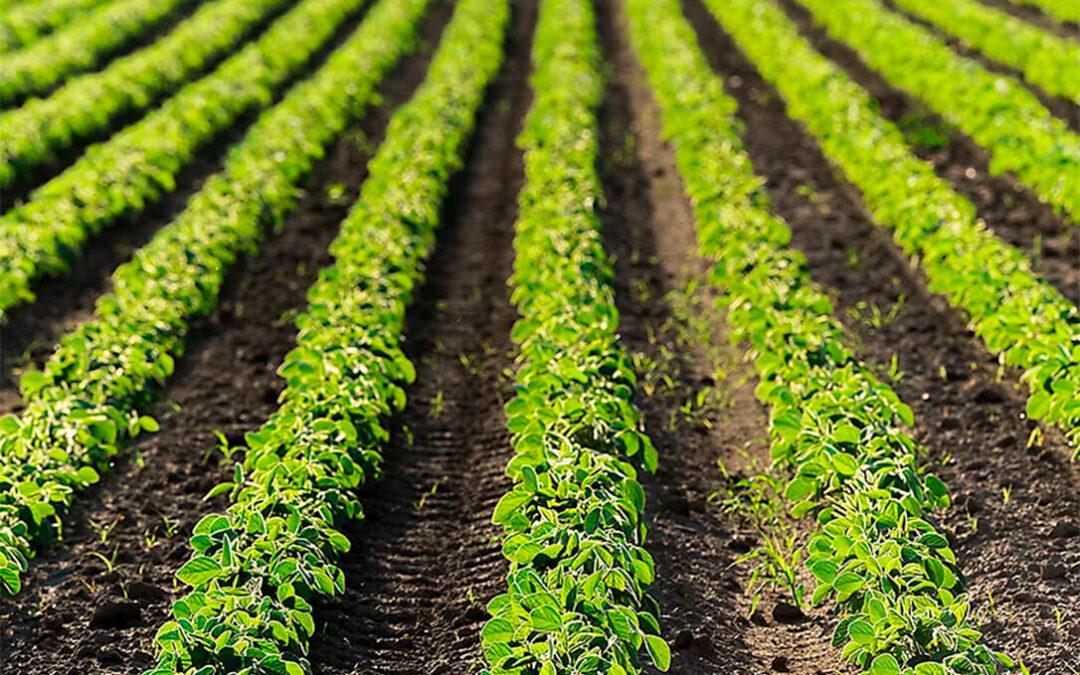 Corteva presenta su primer biofertilizante SullicaB, un estimulante biológico a base de microorganismos promotores del crecimiento vegetal