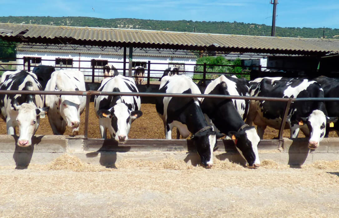 Exigen a la industria láctea que la subida de la leche compense el incremento real de los costes de alimentación del ganado