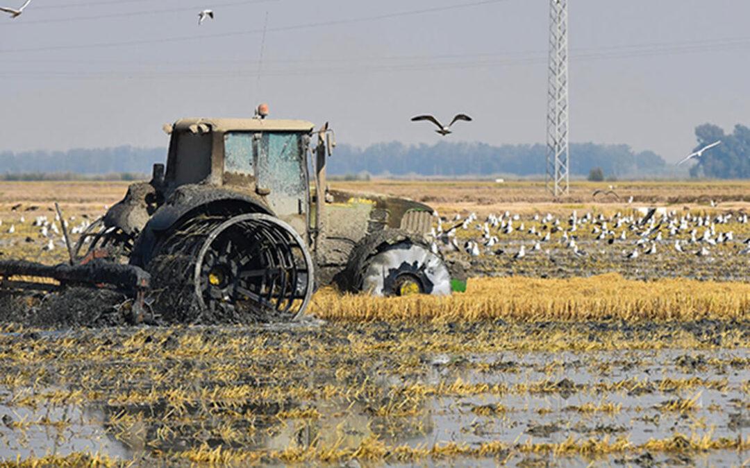 Cooperativas se suma a la movilización para exigir a la CH Guadalquivir que amplíe la dotación hídrica para el cultivo del arroz