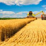 La cosecha mundial de trigo subirá y caerá la de cebada, según los datos del aforo francés