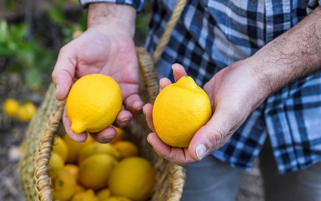 El limón ecológico está de moda: Aumenta su cultivo un 386% en ocho años y se sitúa como el cítrico con más superficie