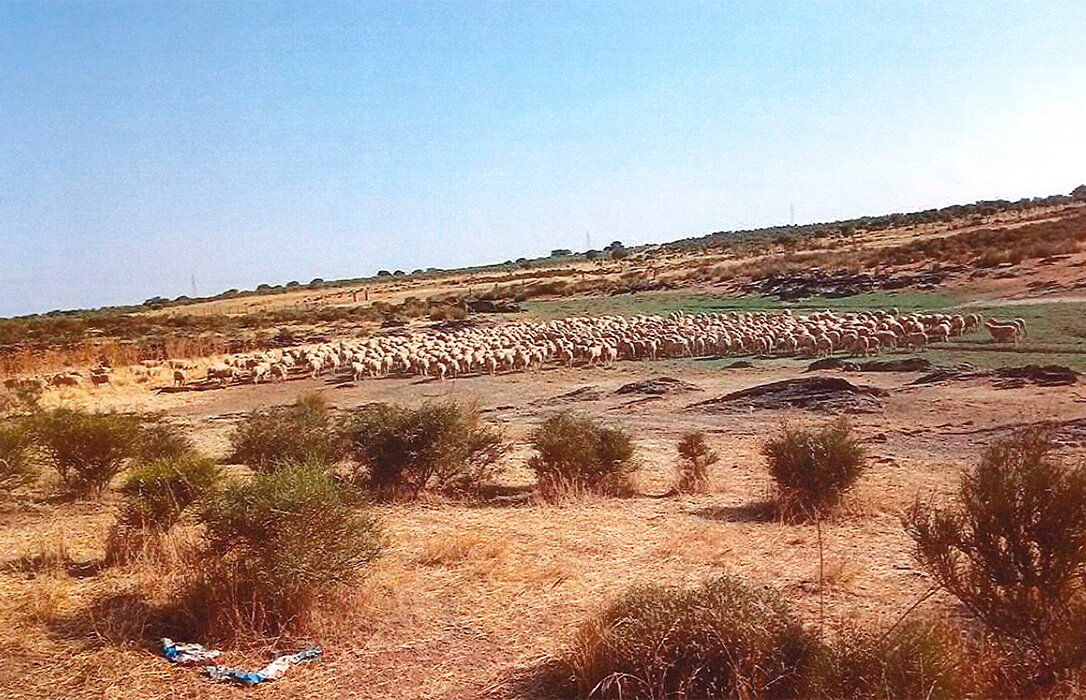 Denuncian el «engaño manifiesto» de Agroseguro en las valoraciones de la sequía en pasto