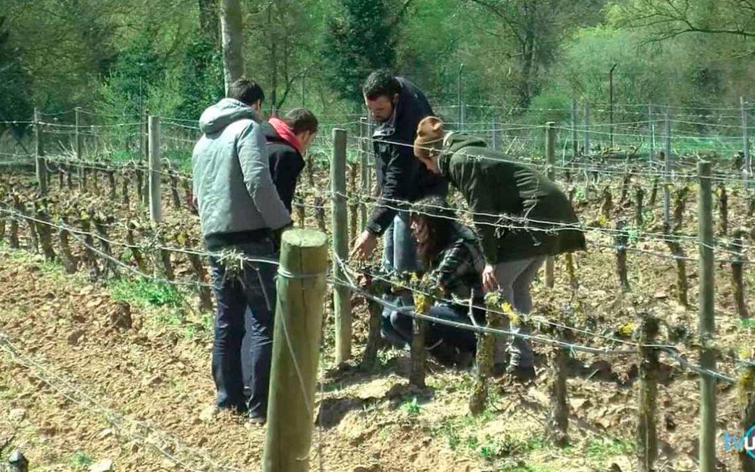 Acuerdo para fomentar la Formación Profesional y el relevo generacional en el sector agrario andaluz