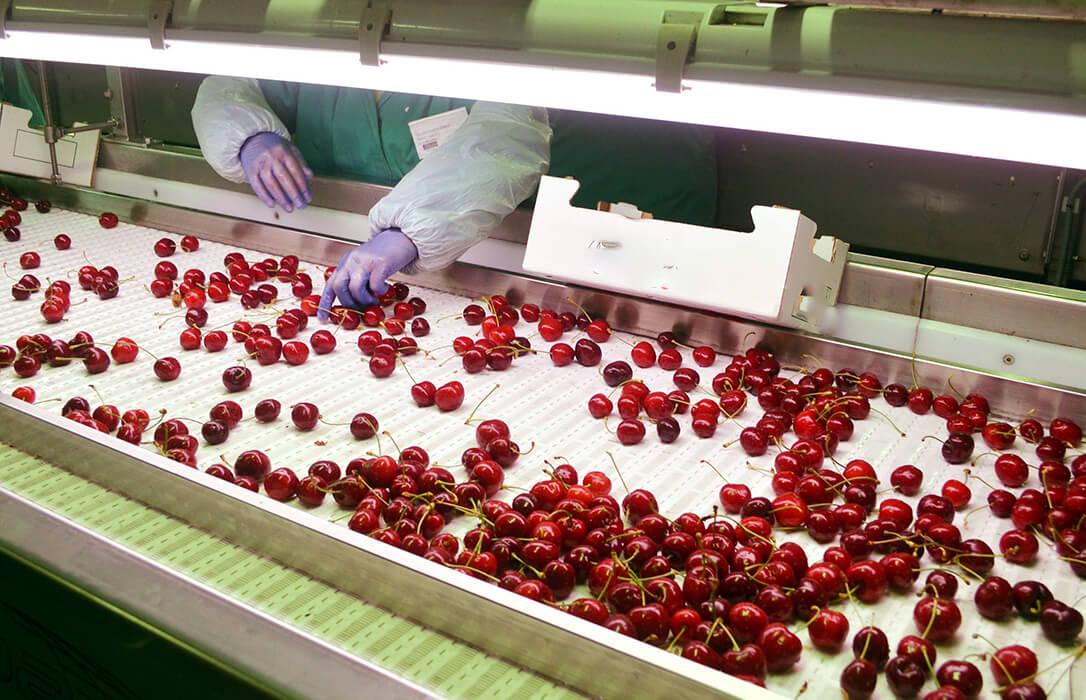 Denuncian ante la AICA a las centrales hortofrutícolas por no firmar ningún contrato de compra-venta en esta campaña de la fruta