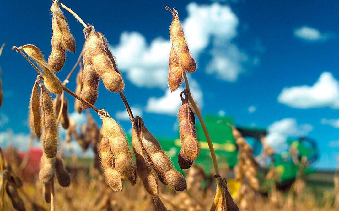 La mayor demanda de biodiésel y piensos para alimentación animal dispara los precios de los aceites vegetales