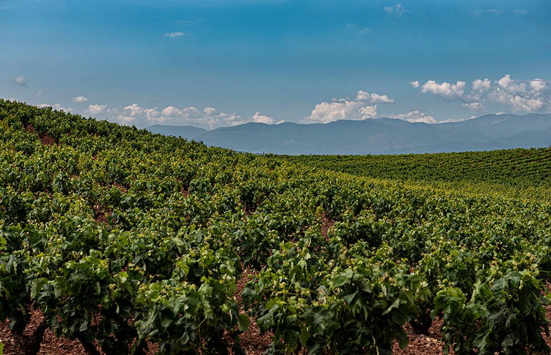 Los costes de producción medios de la uva en La Rioja en 2020 se sitúan entre 0,67 y 0,68 euros/kg en tinta y entre 0,55 y 0,56 en blanca