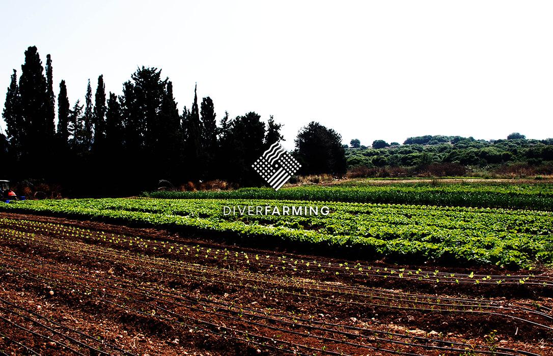 Los suelos agrícolas bajo manejo convencional contienen niveles de pesticidas hasta 10 veces más altos que los suelos de agricultura orgánica