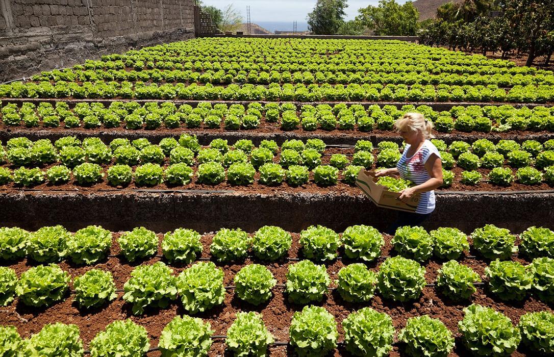 Fertiberia TECH lanza una línea de productos biotecnológicos para la agricultura ecológica: NEOFORCE Biocontrol