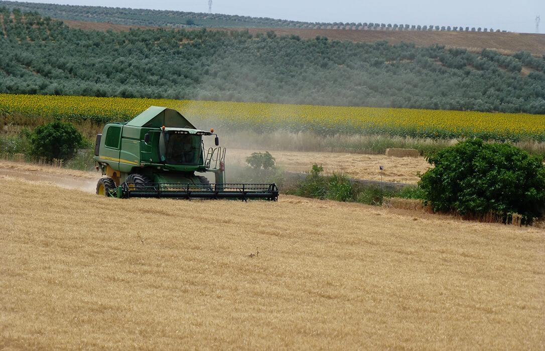 Nueva escalada en el precio de los cereales, que ya vértigo al no ser posible cuánto hay de realidad y cuánto de especulación