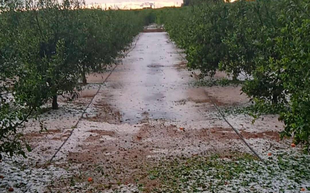 Piden a Planas ayudas por el pedrisco de abril de la Plana Baixa como ha hecho con las zonas afectadas por la borrasca Filomena