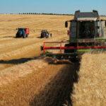 Perspectivas aceptables, por encima de la media, de cara la próxima cosecha cerealista en la Castilla y León
