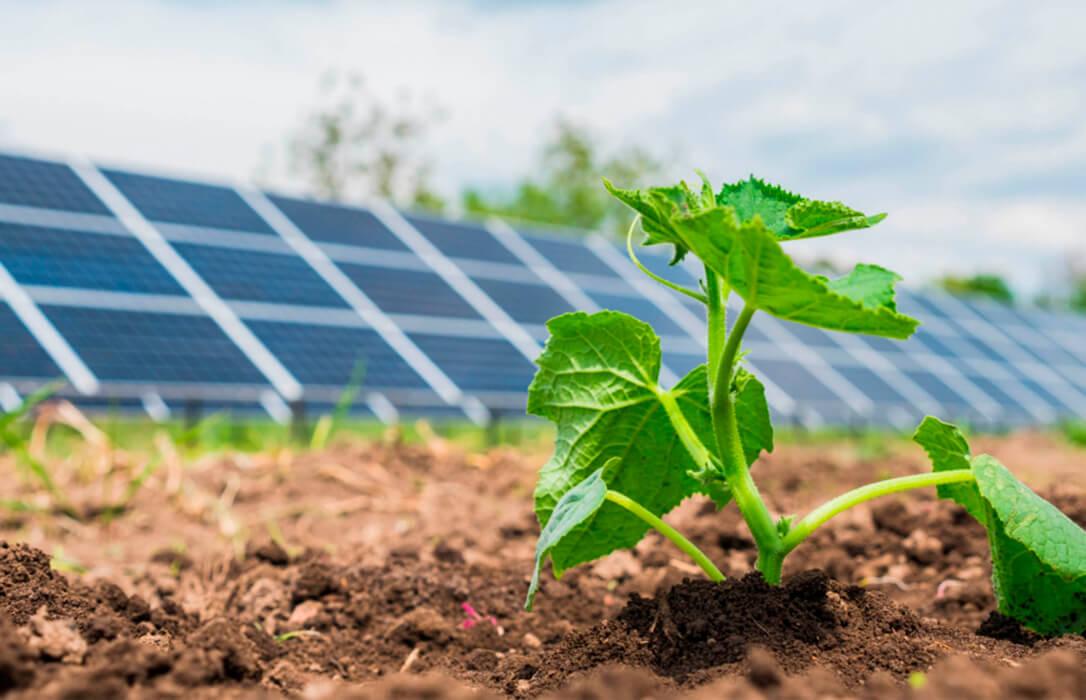 La 'plaga solar' en forma de nuevos macroparques fotovoltaicos se entiende en CyL con 8 proyectos más ante el enfado agrario
