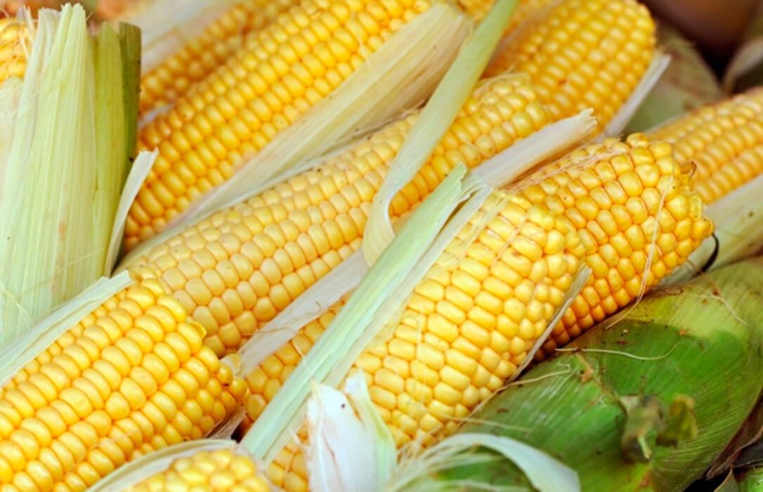 El maíz, que sube 12 euros en una semana, sigue siendo el motor de unas cotizaciones de los cereales que frenan algo sus subidas