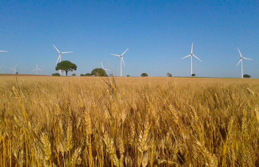 La sequía reduce la producción de cereal en Cádiz, en especial el trigo duro, a instan a vender a las cooperativas para salvar los precios