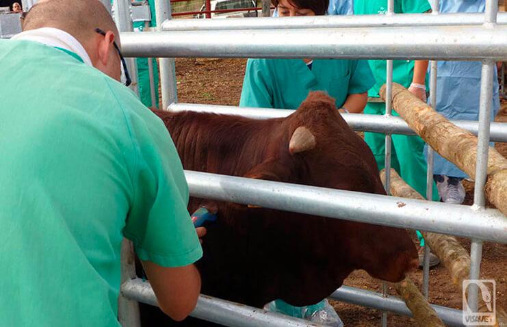 Los veterinarios siguen reclamando la reanudación de la vacunación frente a la Covid como profesionales sanitarios que son
